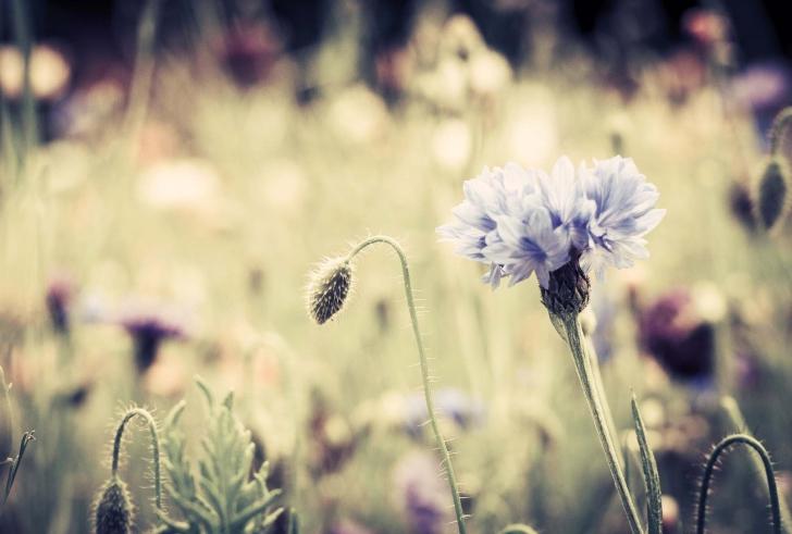 Meadow-Flowers-Vintage-wide-i.jpg