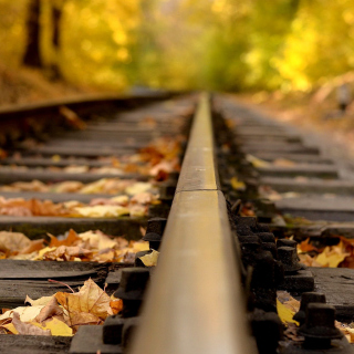 Railway tracks in autumn - Obrázkek zdarma pro 208x208