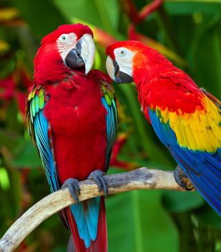 Two Macaws - Obrázkek zdarma pro Nokia Lumia 820