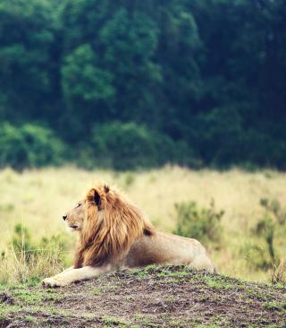 Wild Lion - Obrázkek zdarma pro iPhone 5C