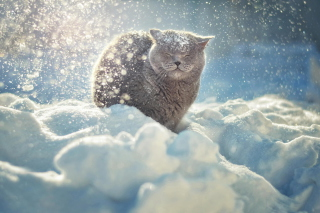 Free Cat Likes Snow Picture for Android, iPhone and iPad
