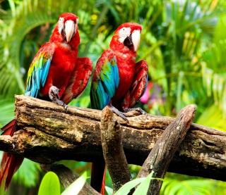 Exotic Birds - Obrázkek zdarma pro iPad 3