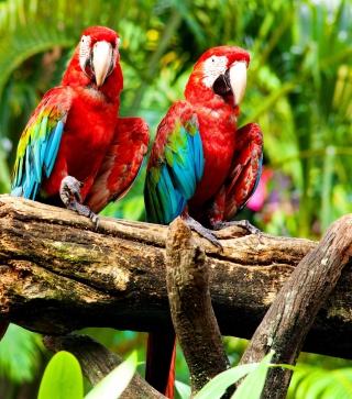 Exotic Birds - Obrázkek zdarma pro 768x1280