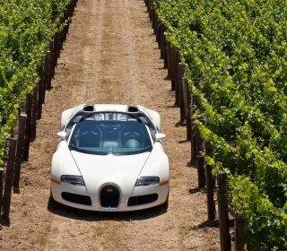 Bugatti Veyron In Vineyard - Obrázkek zdarma pro iPad mini 2