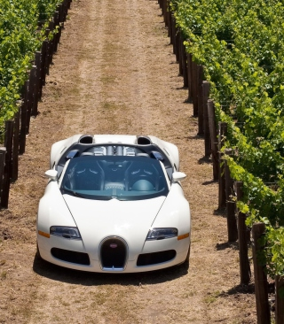 Bugatti Veyron In Vineyard - Obrázkek zdarma pro Nokia C-5 5MP