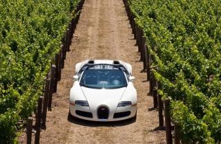 Bugatti Veyron In Vineyard - Obrázkek zdarma pro HTC Desire