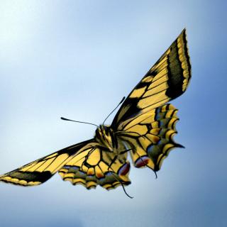 Black and White Butterfly - Obrázkek zdarma pro 128x128