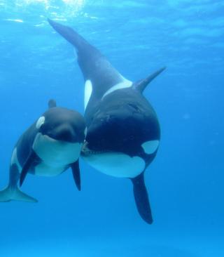 Smiley Dolphins - Obrázkek zdarma pro 360x640