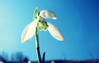 White Flower In Sky Picture for Android, iPhone and iPad