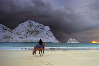Horse on beach Picture for Android, iPhone and iPad