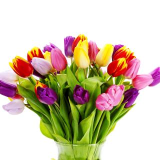 Tulips Bouquet - Obrázkek zdarma pro 1024x1024