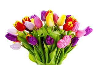 Tulips Bouquet Wallpaper for Android, iPhone and iPad