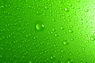 Green Water Drops Wallpaper for Android, iPhone and iPad