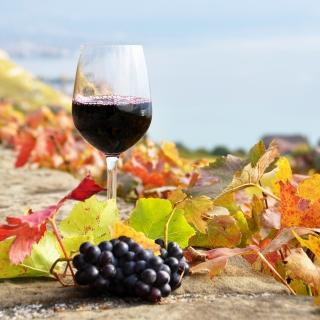 Wine Test in Vineyards - Obrázkek zdarma pro iPad Air