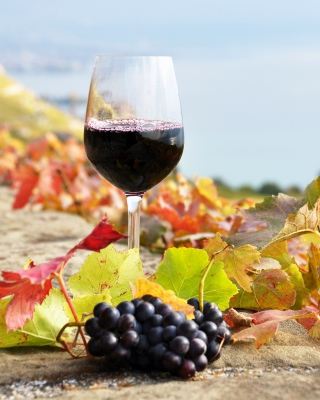 Wine Test in Vineyards - Obrázkek zdarma pro Nokia Asha 309