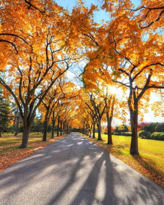 Autumn Alley in September - Fondos de pantalla gratis para Samsung GT-S5230 Star