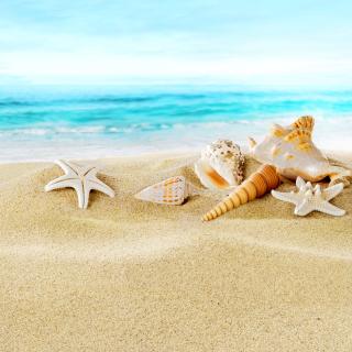 Seashells on Sand Beach - Obrázkek zdarma pro iPad