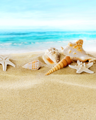 Seashells on Sand Beach - Obrázkek zdarma pro 240x432
