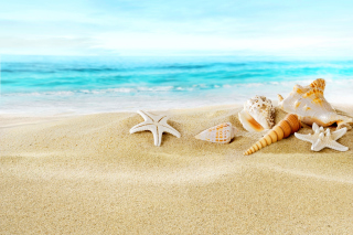 Seashells on Sand Beach Picture for Android, iPhone and iPad