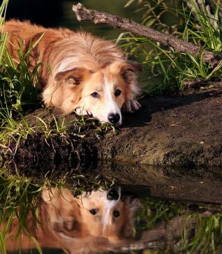 Ginger Dog Resting By Lake - Obrázkek zdarma pro Nokia Asha 311