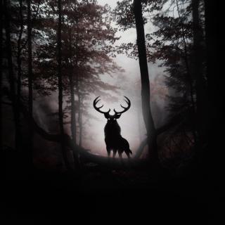 Deer In Dark Forest - Obrázkek zdarma pro 320x320