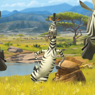 Zebra From Madagascar - Obrázkek zdarma pro iPad Air