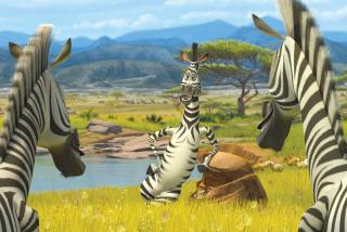 Zebra From Madagascar - Obrázkek zdarma pro Google Nexus 7