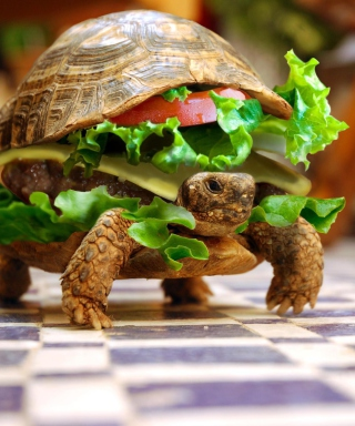 Turtle Burger - Obrázkek zdarma pro Nokia 300 Asha