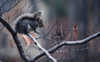 Squirrel On Branch Picture for Desktop 1920x1080 Full HD