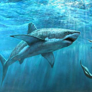Shark Teeth - Obrázkek zdarma pro iPad Air