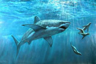 Shark Teeth - Obrázkek zdarma pro Google Nexus 7