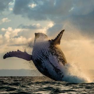 Whale Watching - Obrázkek zdarma pro iPad mini 2