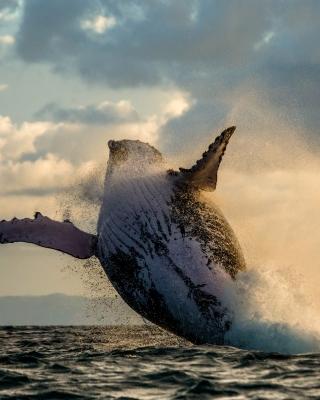 Whale Watching - Obrázkek zdarma pro Nokia Asha 308