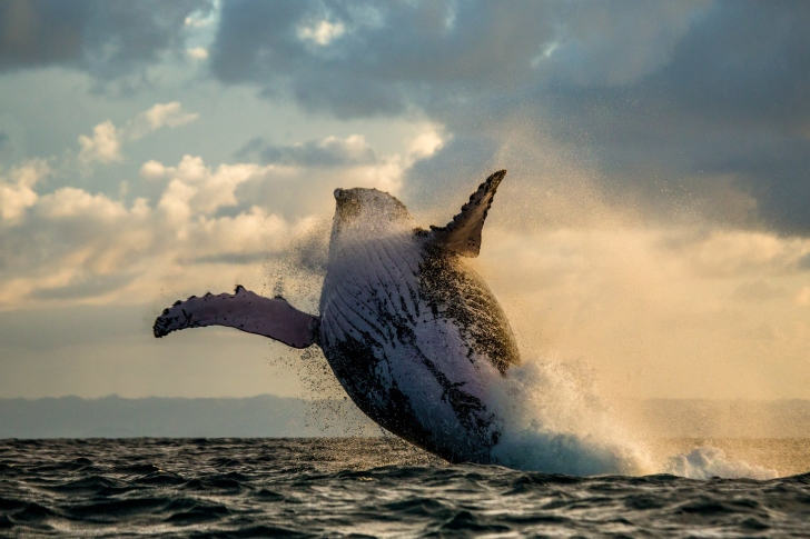 Whale Watching wallpaper