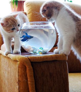 Kittens Like Fishbowl - Obrázkek zdarma pro iPhone 6 Plus