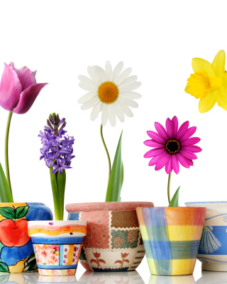 Bright flowers in pots - Obrázkek zdarma pro 360x480