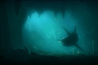 Shark Underwater - Obrázkek zdarma pro Desktop Netbook 1366x768 HD