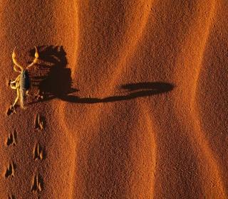 Scorpion On Sand - Obrázkek zdarma pro iPad 3