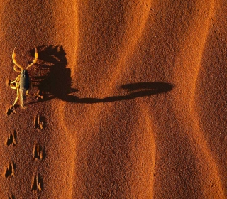 Scorpion On Sand - Obrázkek zdarma pro iPad mini