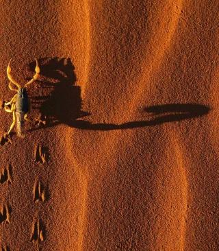 Scorpion On Sand - Obrázkek zdarma pro 132x176