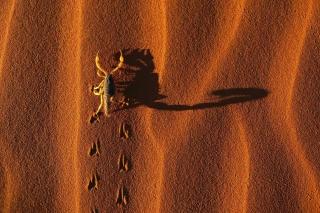 Scorpion On Sand - Obrázkek zdarma pro Android 640x480