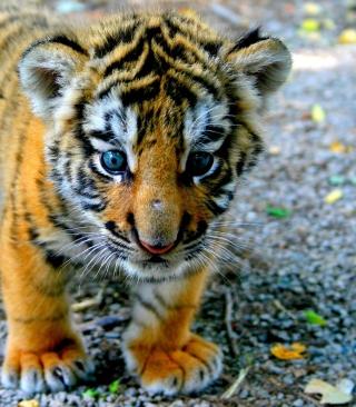 Cute Tiger Cub - Obrázkek zdarma pro Nokia Asha 202
