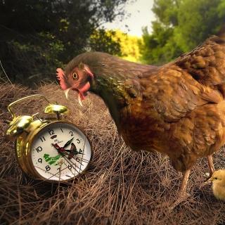 Chicken and Alarm - Obrázkek zdarma pro 208x208