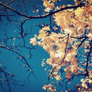 Fall Leaves - Obrázkek zdarma pro iPad