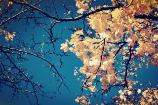 Fall Leaves Background for Nokia Asha 200