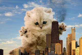 Dangerous Cat Wallpaper for Android, iPhone and iPad