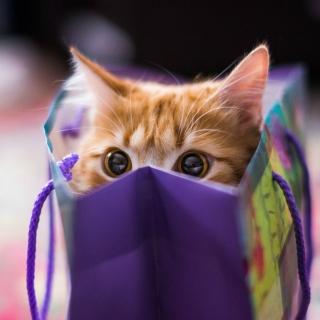 Funny Kitten In Bag - Obrázkek zdarma pro 1024x1024