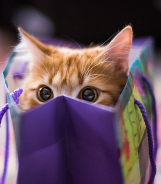 Funny Kitten In Bag - Obrázkek zdarma pro Nokia C6
