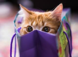 Funny Kitten In Bag - Obrázkek zdarma pro 176x144