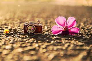 Macro Camera and Flower - Obrázkek zdarma pro Fullscreen Desktop 1024x768